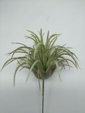 Easter grass tillandsia air plant. Silk Flower Floral Arrangements