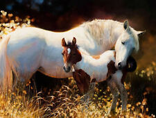 ZWPT243 large 100% hand-painted two horses decor art oil painting on canvas