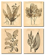 Old-Fashioned Botanical Prints; Four 8x10-Inch Poster Prints