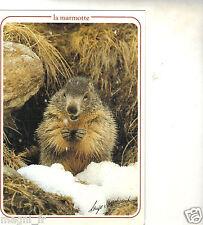 Fantaisie - La marmotte   (H2029)