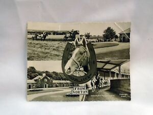 VINTAGE  Horse Postcard - Norton North Yorkshire