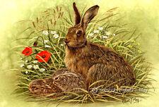 sm Wildlife Hareline hare print by Paul Doyle