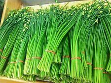 Flowering Chinese Leek, 2000 Seeds, popular Chinese specialty herb - Perennial !