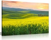 Beautiful Spring Hills Yellow Valley Landscape Canvas Wall Art Picture Print