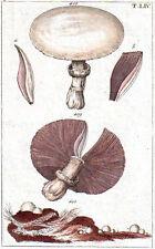 1870's vintage MUSHROOMS original painted engraving botanical print T-LIV