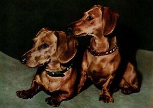Two Red Dachshund Dog Dachshunds Smooth Coat Postcard Popp-Verlag Heidelberg New