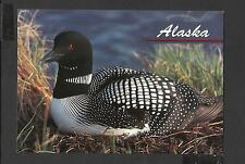 Colour Postcard Portrait  The Common Loon  Alaska  unposted