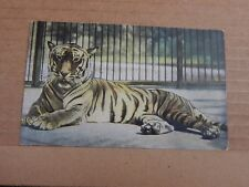 Postcard Tiger At The Zoo Bavarian Colour Card posted