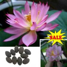 10Pc Lotus Flower Seeds Rare 6 Kind Water Plant Bonsai Hydroponic Garden NEW