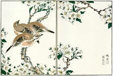 Japanese Woodblock Reproductions: Kashu: Melodious Thrush - Fine Art Print