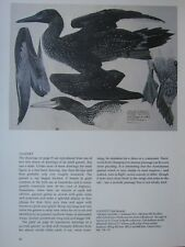 More details for beautiful tunnicliffe bird print ~ gannet