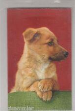 Quietschekarte süßer Hund AK Chiens Dogs Honden France Frankreich 1601060