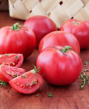 "Bradley Tomato *Heirloom* (50 Seed's) "" FREE SHIPPING"" (NON GMO)"