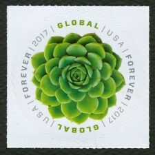 #5198 Global Forever: Echeceria, Mint **ANY 4=FREE SHIPPING**