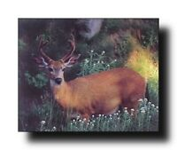 Whitetail Deer Wall Decor Wildlife Animal Picture Art Print Poster (16x20)