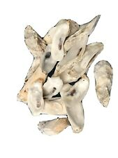 Oyster Shell For Crafts (20)