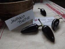 Jalapeno Purple 50+ seeds