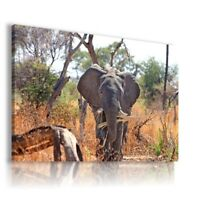 ELEPHANT SAWANNAH Domestic And Wild Animals Canvas Wall Art Picture Large AN192X