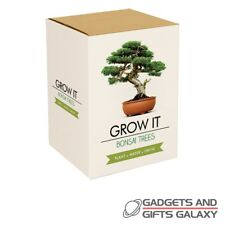 Bonsai Tree Grow It Kit Plant Water & Watch Grow! Gift Novelty Adult Desktop
