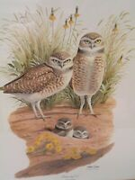 Burrowing Owl by Arthur Singer - Print - Artist Signed - Professionally Framed