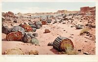 ADAMANA NEW MEXICO THE PETRIFIED FOREST POSTCARD 1900s