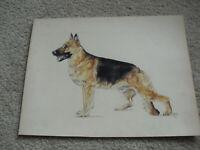 Original Vintage 1970 PDP Signed Pastel German Shepherd Dog Painting