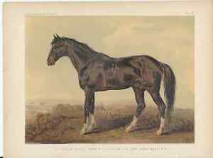Horses, Chromolithograph Book page from The Book of The Horse by S. Sidney 1870s