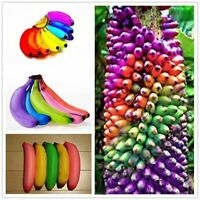 100pcs Rainbow Banana Seeds Bonsai Fruit Plants Home Garden Decor Delicious