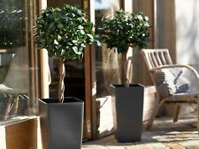 Artificial 3ft / 90cm Bay Laurel Topiary Tree Plant - Suitable for Outdoor Use