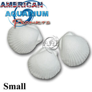Original AAP Wonder Shell -Small. Fresh NOT Clearance Product! Authorized Seller