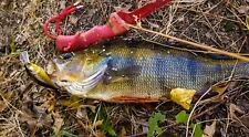 2 Murray Cod Lures Redfin Bass Bream Jacks Flathead Yellowbelly Trout Tailor Cod