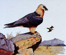 RAPTOR DELLA LESOTHO WWF Uccelli UCCELLO BUSTA Primo Giorno 1° FDC 513