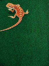 More details for komodo reptile carpet, 120 x 60 cm, reptile substrate, great for all terrariums