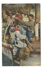 Diver With Sponges Tarpon Springs FL Florida Linen Postcard c. 1930s