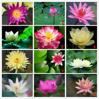 20pcs Lotus Bowl 11varieties Flower Seeds Nelumbo Nymphaea For Aquarium Pond