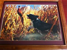 spaniel pheasant hunting picture ready to hang on the wall great picture