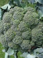 20 seeds Waltham 29 Broccoli Non-Gmo Heirloom seed New seed for 2017