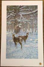 """George McLean """"Winter Deer - White Pine"""" S/N Ltd Ed Print #361/450"""