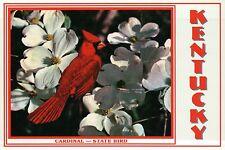The Cardinal, State Bird of Kentucky, Red Bird, North America -- Animal Postcard