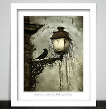 Art Print Bird on a Lantern by Arthur Rackham. Lamp Crow Birds Occult Poster 258