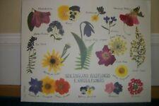 Vintage Mary Stiler Kennebunkport, ME Pressed Flower Print   Signed