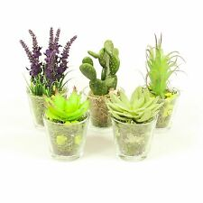 Small Plant Mix in Glass Vase, Succulent & Flowers for Office and Home