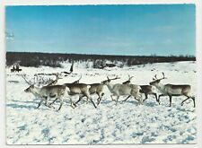 Postcard, Norway, Reindeer on the vast expanse, Posted in UK