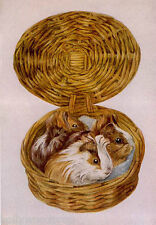 BEATRIX POTTER GUINEA PIGS IN A BASKET ART ARTWORK PAINTING POSTER PRINT REPRINT