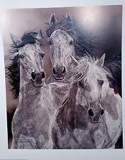 Judy Larson, THE DEFIANT, S/N Print Horses, Mustangs