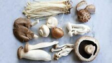 16 Types - 20mL Organic Liquid Mushroom Spores - HIgh Potency Mycelium Extract