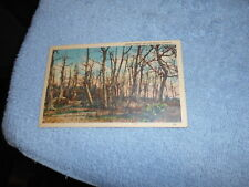 ( G ) VINTAGE / POST CARD / GHOST FOREST  SKYLINE DRIVE VIRGINA