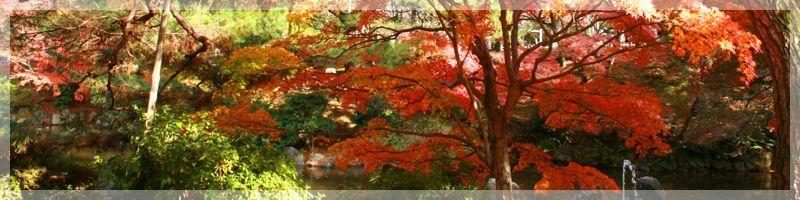 ★ LEGEND CAMERA FESTIVAL JAPAN★