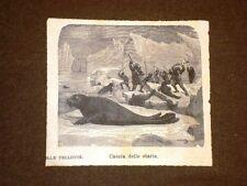 La Caccia alle otarie o leoni marini Polo