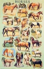 """NEW - HORSE / EQUINE BREEDS POSTER """"Horses by Dover (1987, Poster)"""""""